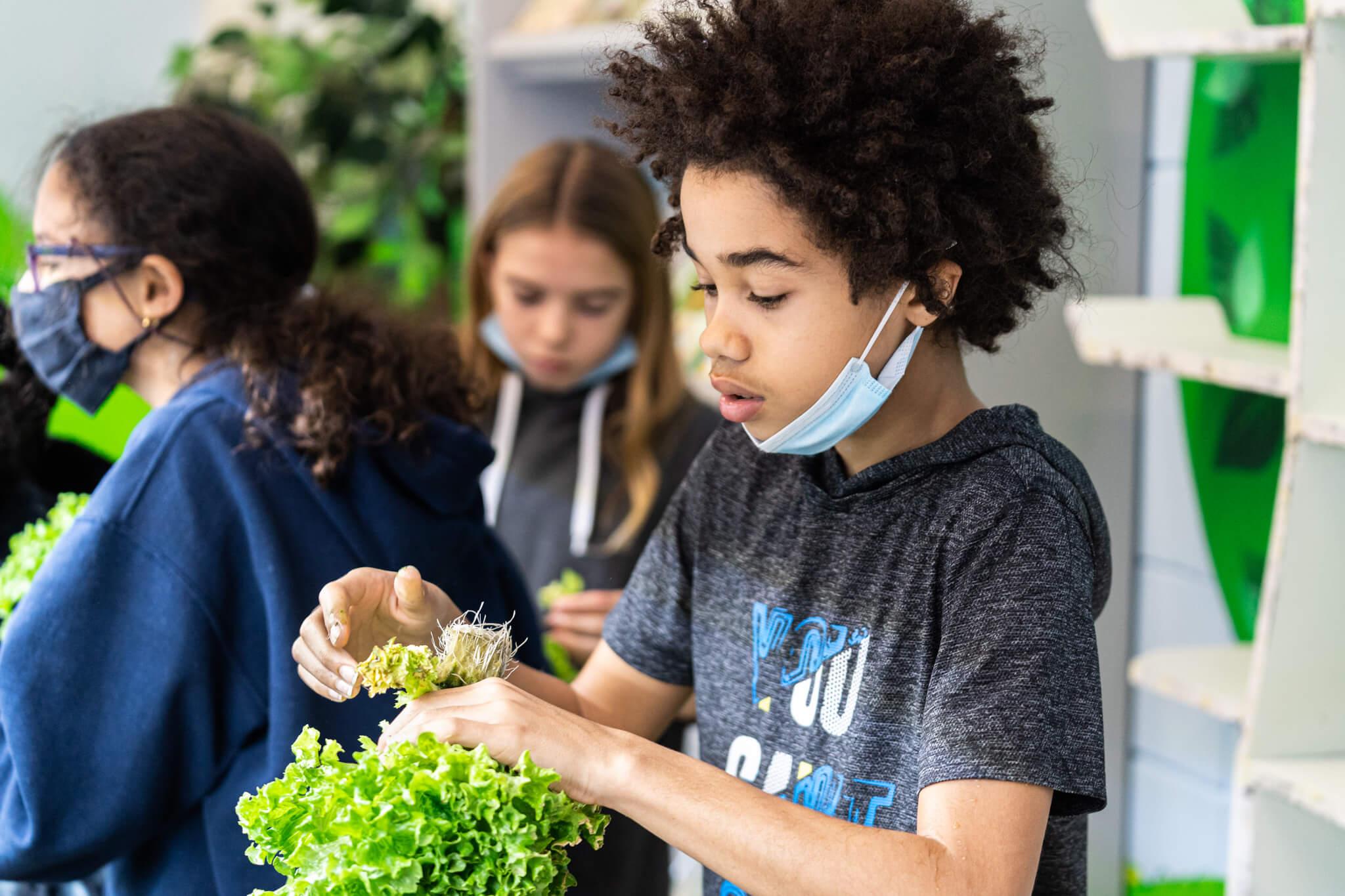 vireo ecole pedagogie salade