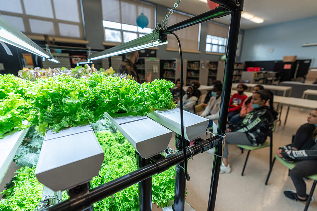vireo hydroponic garden classes