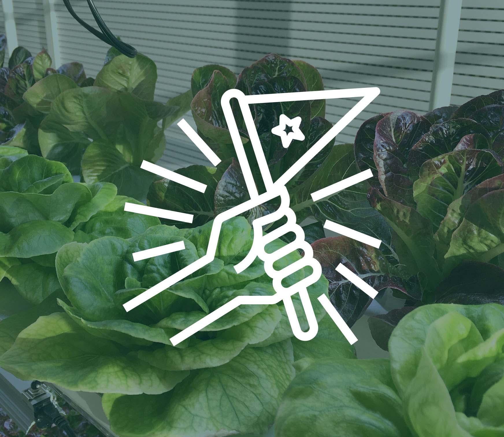 vireo accompagnement renouvellement jardin hydroponique