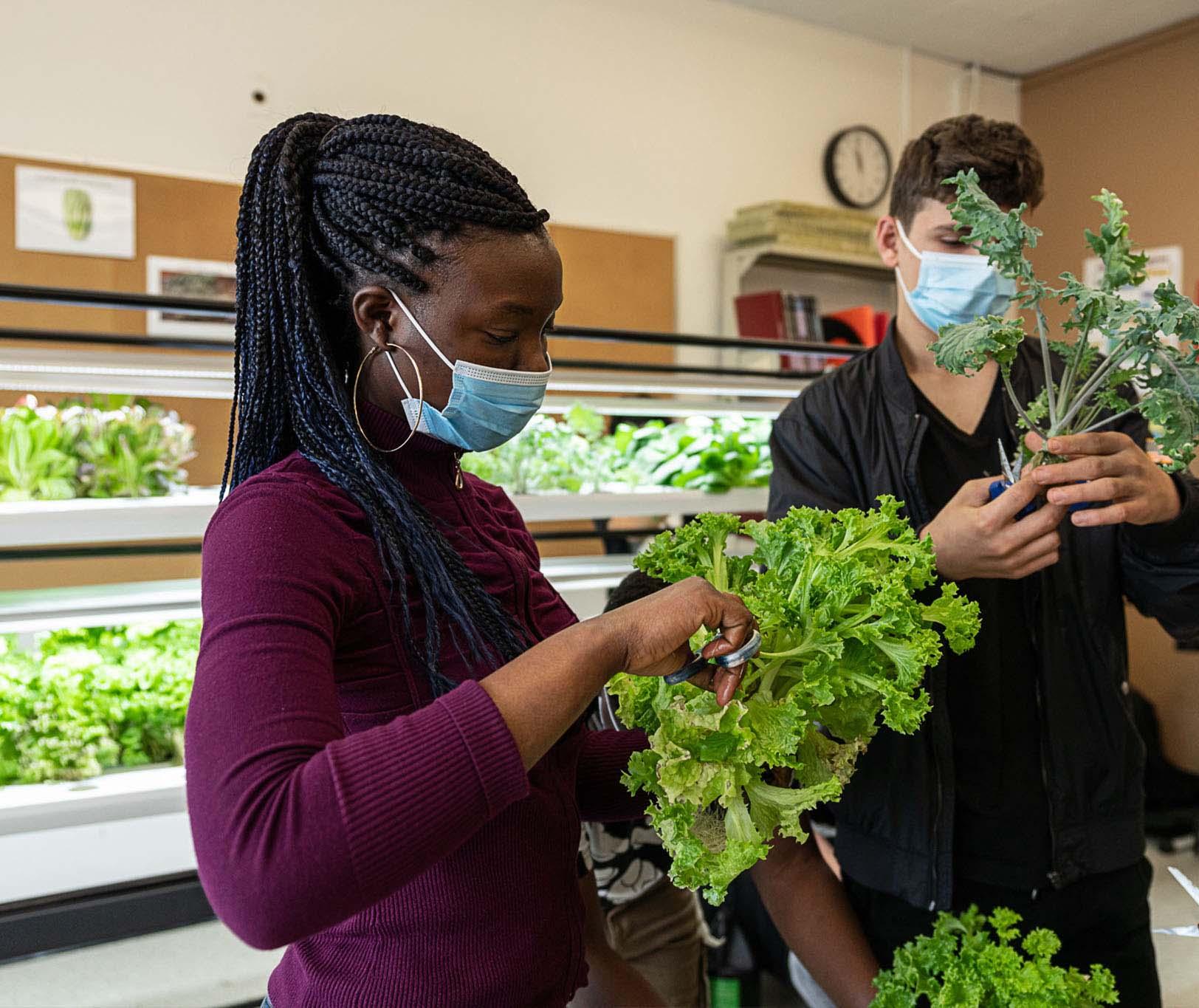 vireo kids salad harvest