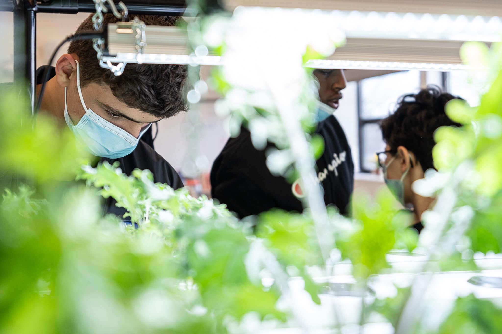 vireo hydroponic garden for children